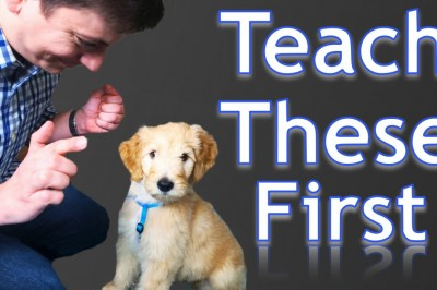 3 Easy Things to Teach your New Puppy