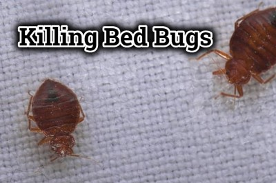 Killing Bed Bugs